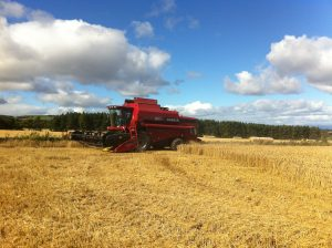 Graeme combining malting barley