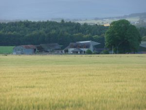 Our farm and crops on a hazy Summers morning