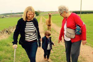 Casper the alpaca walks behind some farm visitors