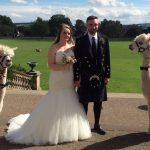 Alpacas at wedding in Baxter Park, Dundee