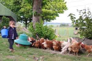 A small buy carrying feed to the hens
