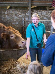 Dodd the bull waiting for treats on a farm tour