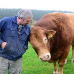 Dodd the bull gives Farmer Graeme a rub
